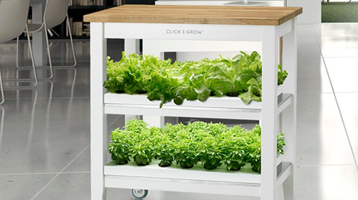 faire pousser des legumes